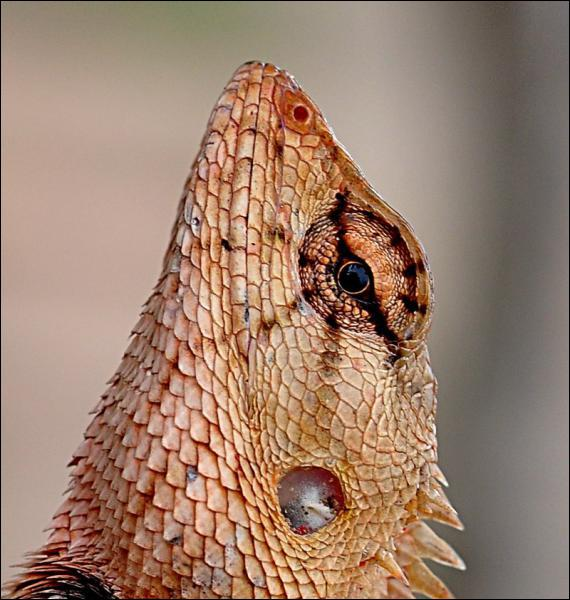 What does this reptile have?