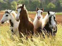 Horses; The Tack Quiz