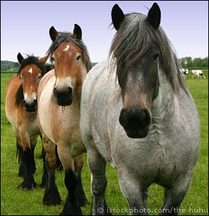 What is a blue roan?