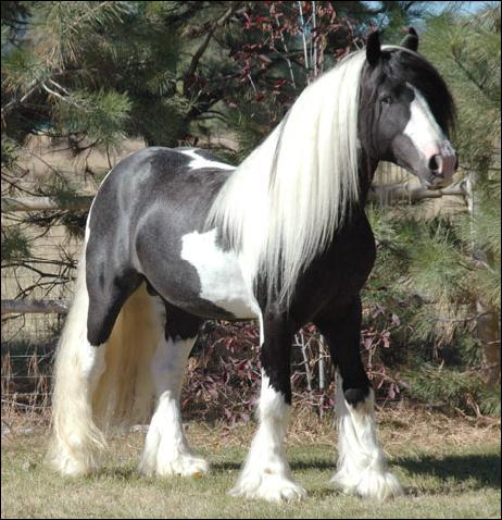 What color is this horse?