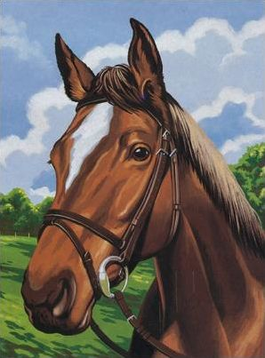 Horses; The markings quiz