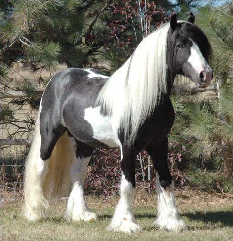 Horses; The Cross country quiz