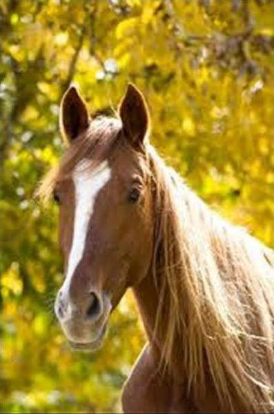 Horses; The dressage quiz