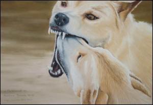 A mother dingo regurgitates food for her puppies...