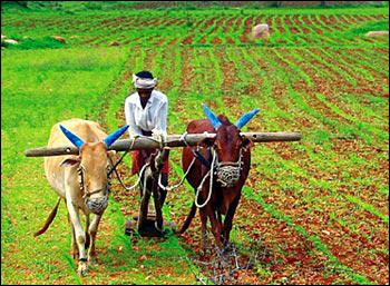 Agriculture is the raising of domesticated plants and animals, while changing human societies forever.