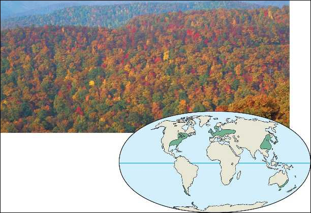 Which of the following is NOT a true statement about temperate broadleaf forests?