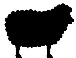 What's the colour of the sheep?