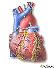 What anatomical part is illustrated in the image?