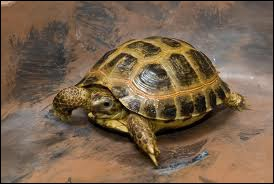 Tortoises live ...