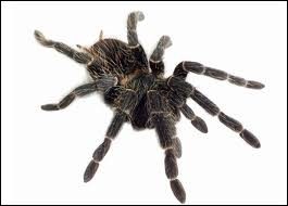This animal is not an insect. It's got eight legs and some of them can be really dangerous.