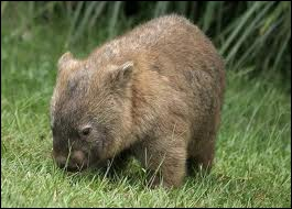 These animals are similar to hutias, marmots and beavers.