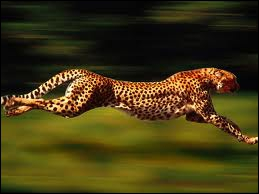 I am the fastest animal in the world!