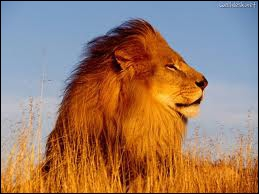 Mufasa, Scar and Simba are some ... s of the film  The ... King