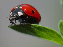 These red and black insects are ...