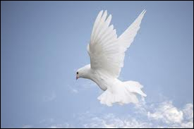 Doves, white pigeons are the symbol of peace. This bird brought an olive tree twig to Noah's ark as a representation of land in a near place.
