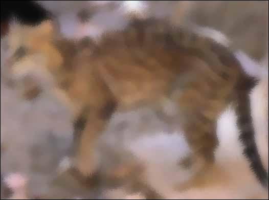 Identify this animal