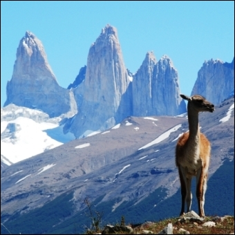 Chile has a width of 175 km. Its length is...