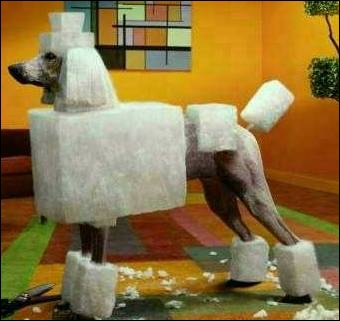 Is structuring the coat of a dog prior dog shows considered an attempt to change the dog's structure?