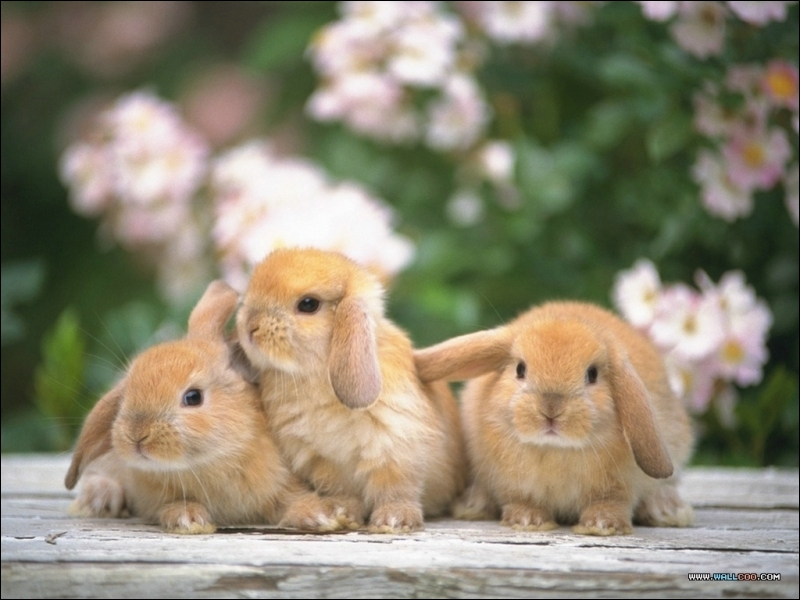 How many rabbits in the picture?