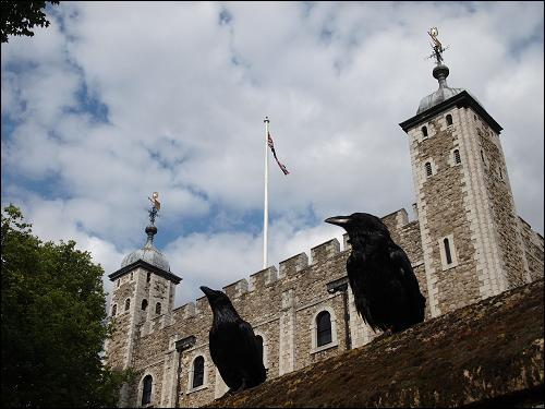 A superstition holds that   If the Tower of London ... fly away, the Tower will fall