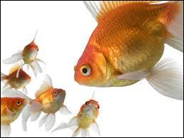 Gold Fish, What's its Kingdom?