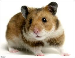 Hamster, What's its Kingdom?