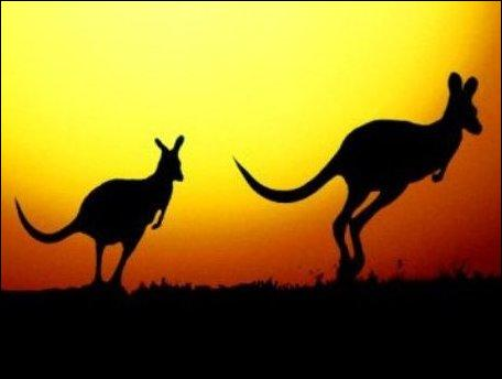 Two ... are jumping across the central part of Australia.