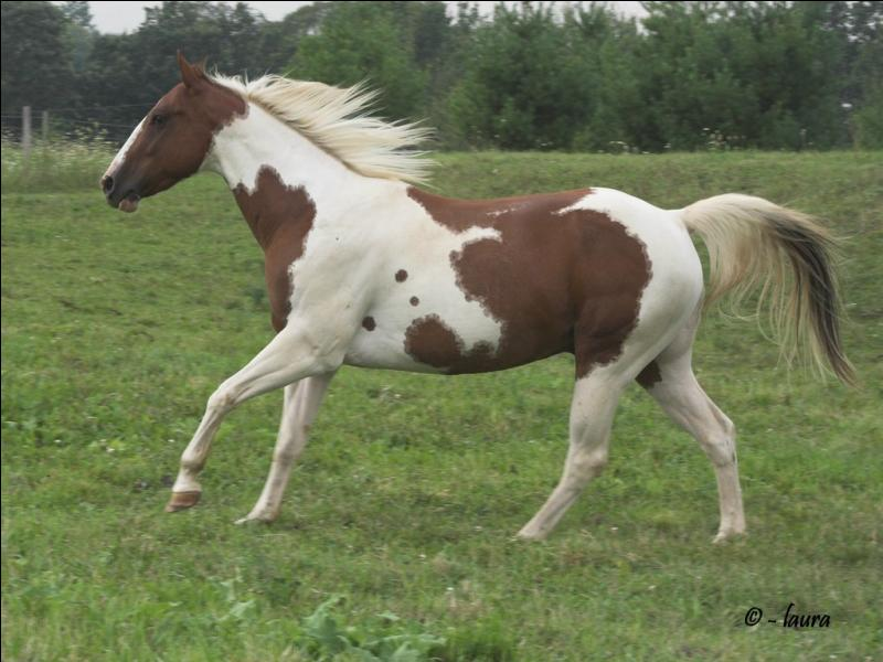 What breed of horse is this?