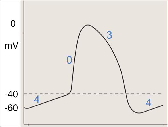 What is the resting potential of an SA Nodal cell?