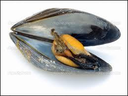 Mussels, not muscles live in the water. They are bivalves...