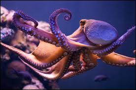 Octopus are cephalopods.