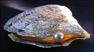Oysters would belong to the same group as clams, cockles, mussels... and if you are lucky you can find pearls in it. White or Black ones.