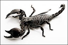 Scorpions are Arthropod animals.