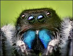 This animal is a spider.