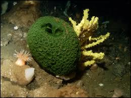 Sponges are NOT plants.