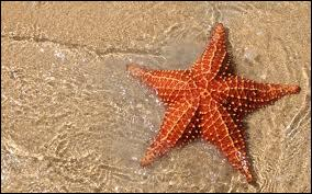 Starfish are ...