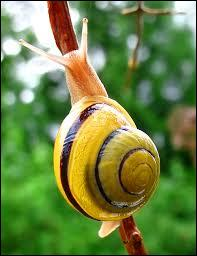 Snails are ...