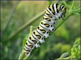 Caterpillars are the larvae of insects... so...