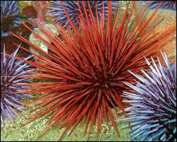 Urchins are ...