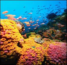Corals are animals or plants?