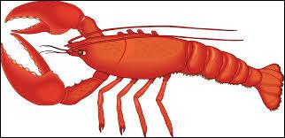 Lobsters are invertebrate animals.