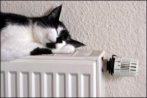 My cat often ... on the radiator when it is cold outside.