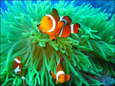 What animals can you find around coral ... ? Butterflyfish, parrotfish, clownfish, anemones and so on.