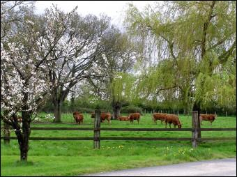 Can you see the cows grazing ... the fence?