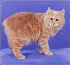 True or False : Cymric is a Welsh breed of cat.