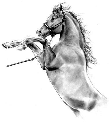 European horses