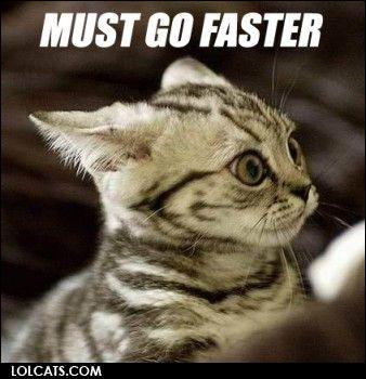 What is a cat's top speed?