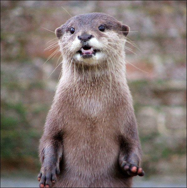Select the habitat this otter lives in.