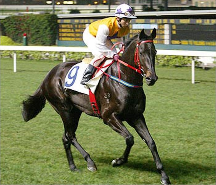 Jackie owned a racehorse in Hong Kong from 2001 - 2003. What was its name?
