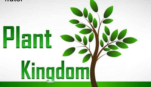 Year 5_Plant Kingdom